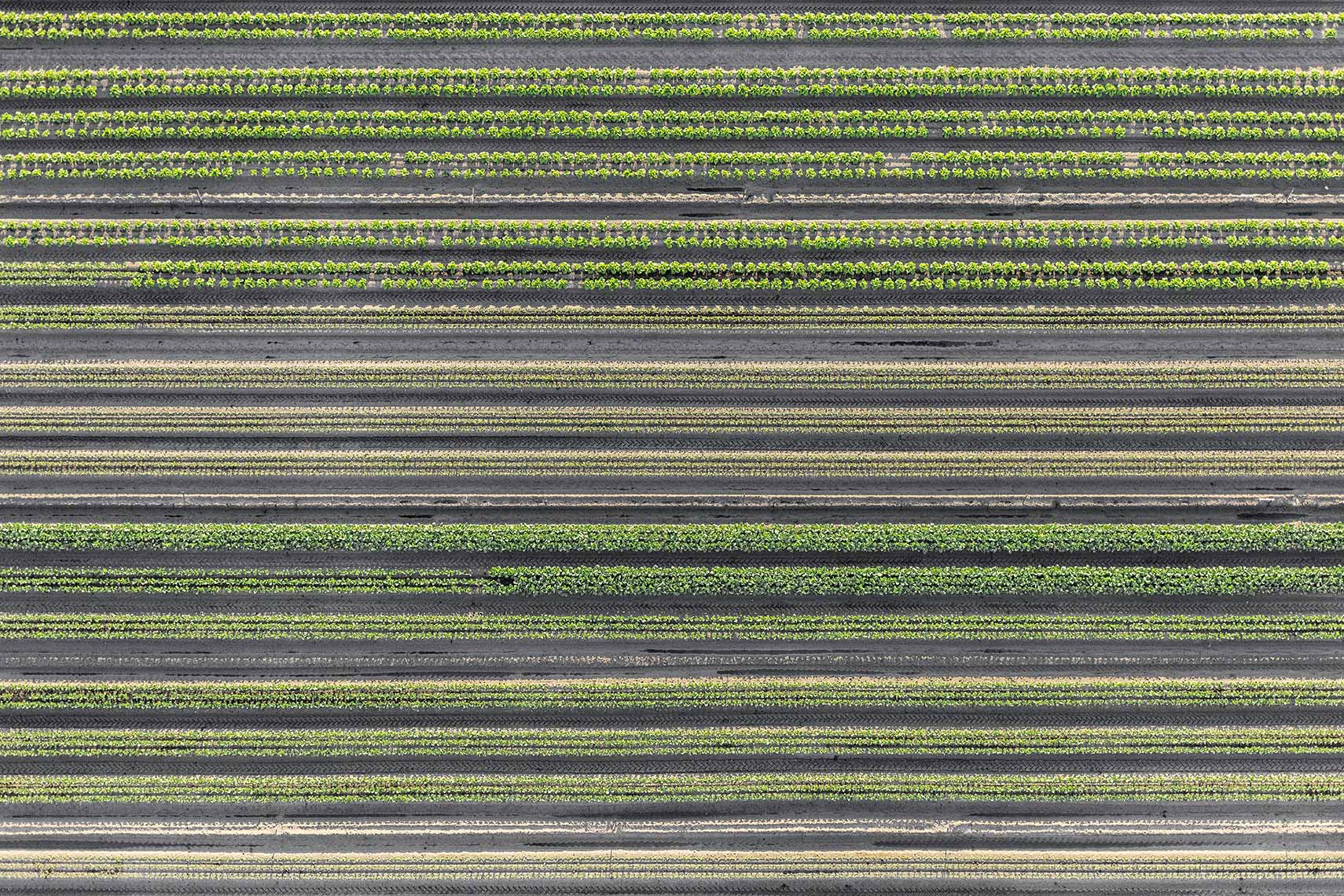 Aerial Landscape Agriculture