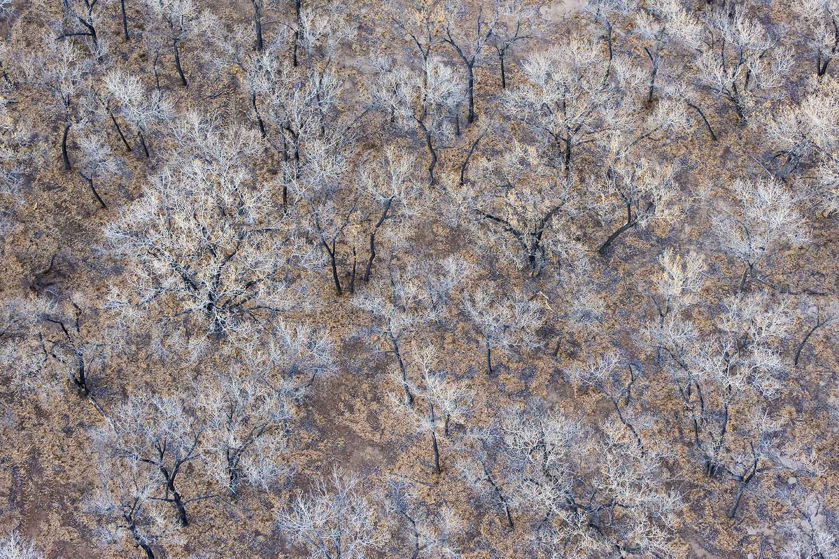 Aerial Landscape Trees